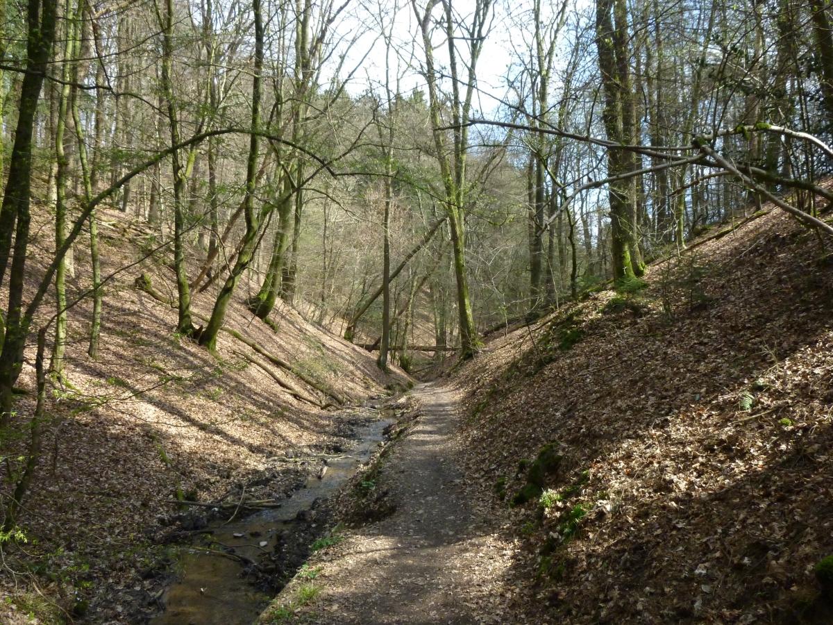 Große Eifgenbachrunde (81)