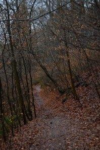 Start in den Wald von Wetter