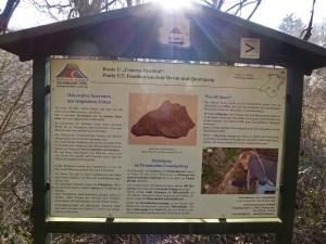 Vulkanlandschaft am Laacher See (15) - Kopie