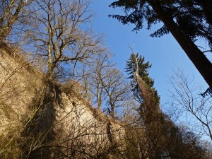 Vulkanlandschaft am Laacher See (25) - Kopie