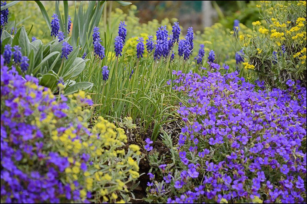 Diese eindrucksvolle Frühlingsblumenpracht hat uns eine Weile verharren lassen.