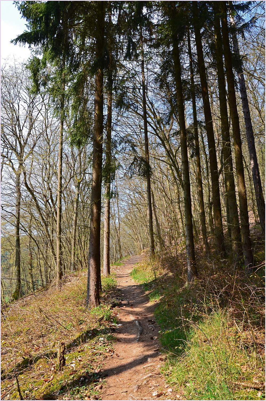 Das Sahrbachtal - Ein Wanderparadies - Ein schmaler Waldpfad