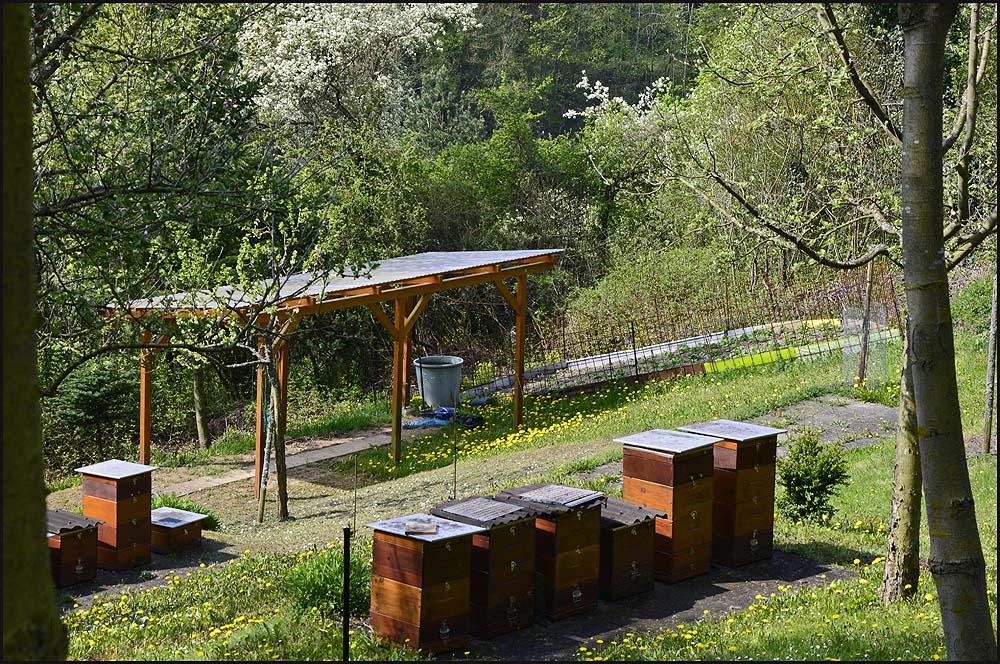 Die lieben Bienchen, was unser liebenswerter Wanderguide mir hier angedroht hat will ich hier verschweigen.