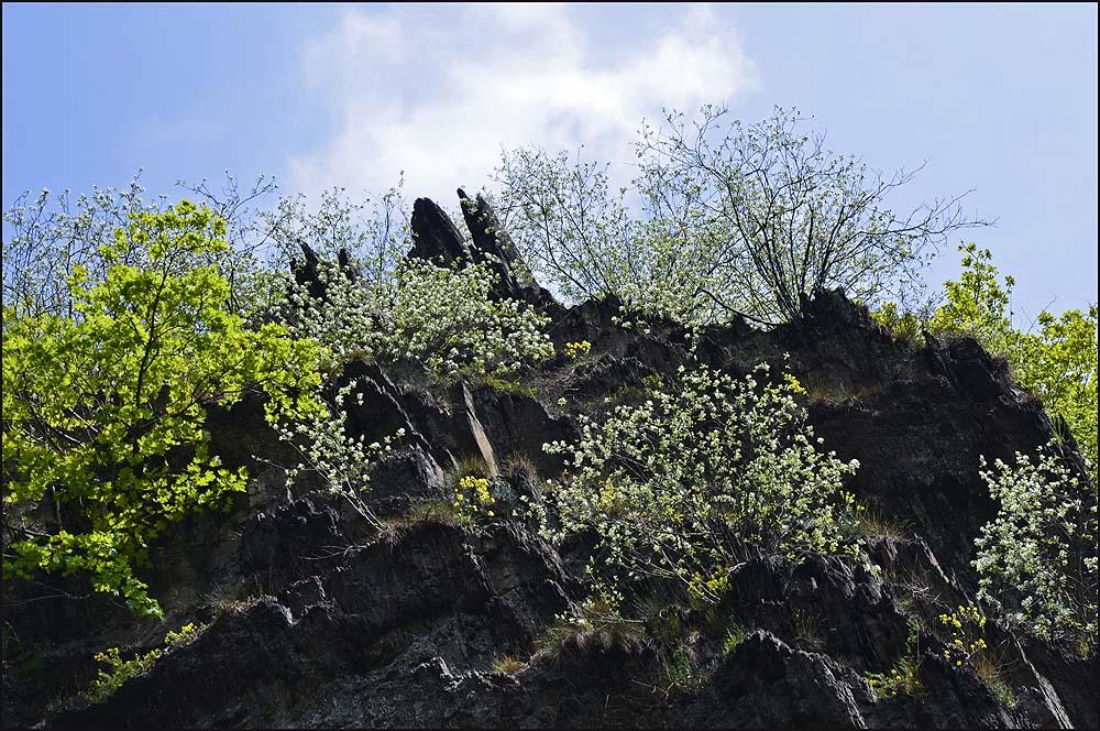 Die typischen schroffen Felsen des Ahrtales, genau aus diesem Grund bin ich hier. Ich liebe diese Anblicke