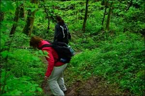 Kasteler Felsenpfad  (7)