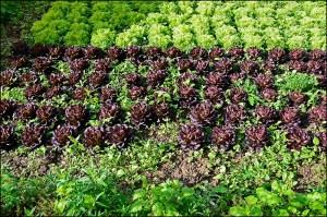 Den Salat am Landgasthof Friedrichsaue sah sehr köstlich aus.
