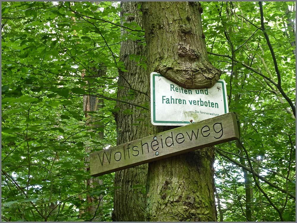 Herfeld_Tour_Wahner_Heide (2)