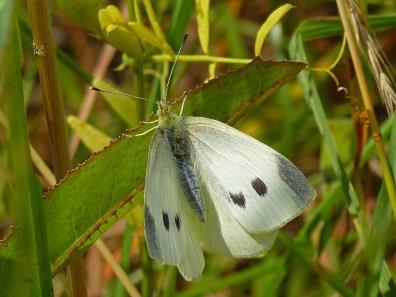 Schmetterlinge3