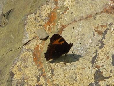 Schmetterlinge4