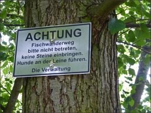 Nette_Schieferpfad (126)