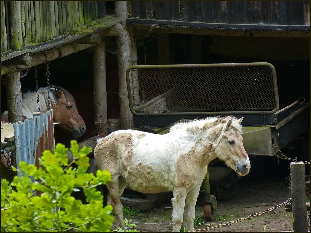 Die tun mir irgendwie leid, die Pferde des Scheriffs. Es ist doch arg trostlos und dunkel dort. Dabei sind Weiden in der Nähe, wo sie schön herum laufen könnten.