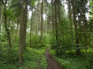 Waldschluchtenpfad (9)