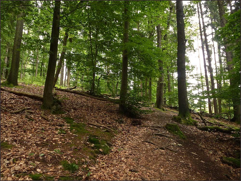 Waldschluchtenpfad (90)