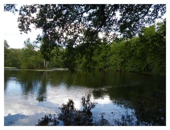 LEYENWEIHER Bei dem Leyenweiher handelt es sich um einen bereits vor 1845 angelegten Stau-Teich. Der Leyenbach wurde hier mit Dämmen aufgestaut, um seine Hochwasser besser kontrollieren zu können.
