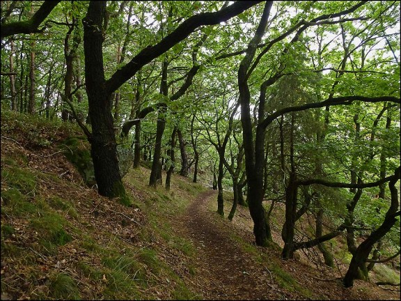 Weiter durch diese göttlichen Wälder auf breiten und schmalen Pfaden nähere ich mich Abenden