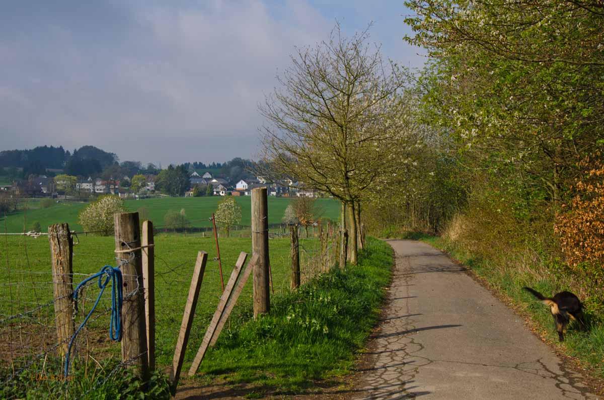 Mühlen und Bäche im Eifgenbachtal (45)