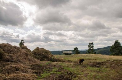 An der Menkehöhe liegt ein Haufen Mulch, schade denn die eigentlich großartige Aussicht wird dadurch erhelblich getrübt.