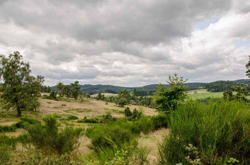 2014 08 17_Wachholder_u_Bergheidenweg_0064