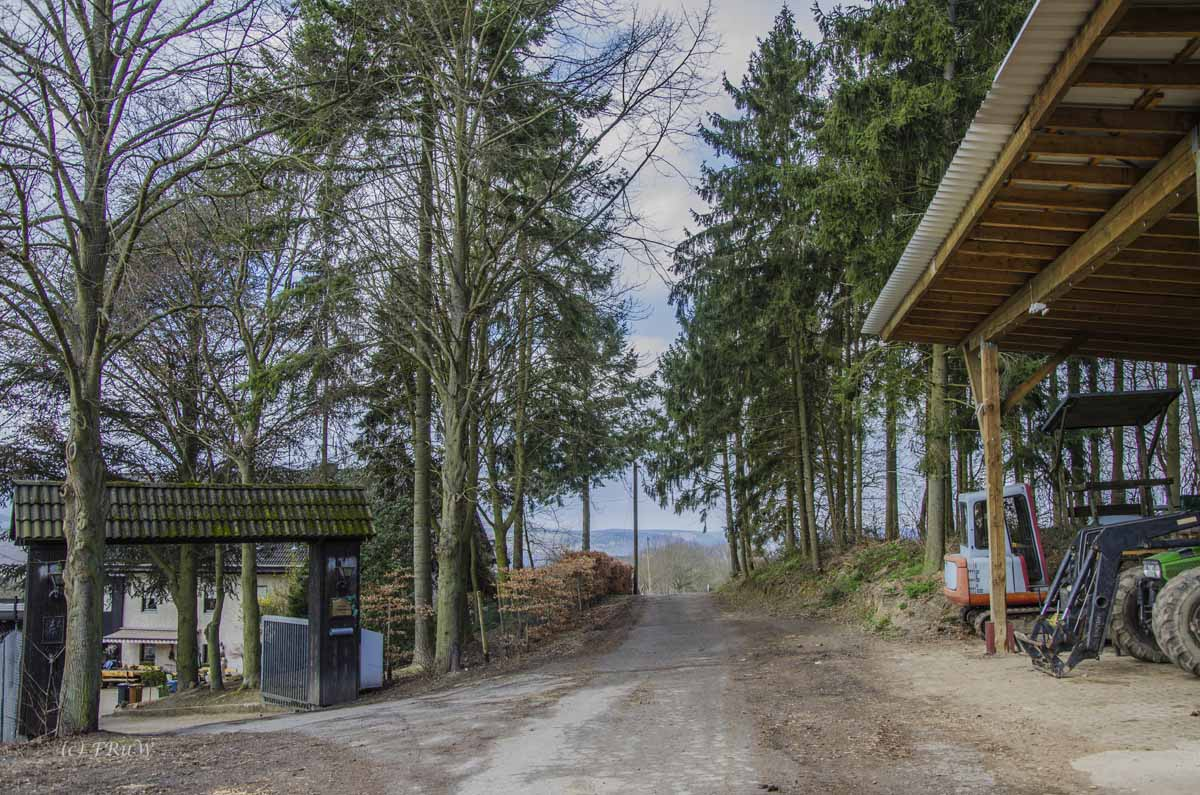 Waldgut Haus Forst