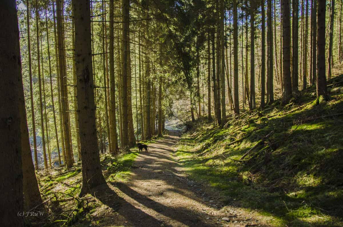 Monschau - Höfen - Rur - Perlenbachtalsperre_0738