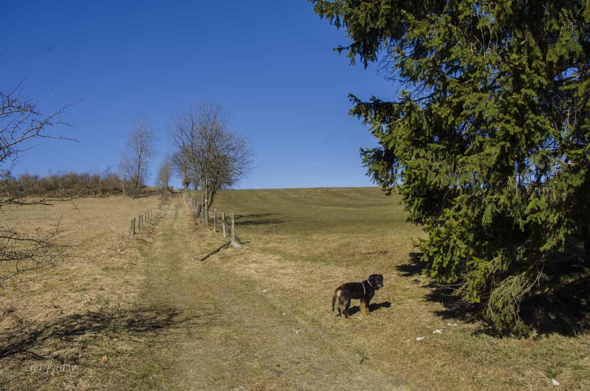 Monschau - Höfen - Rur - Perlenbachtalsperre_0835
