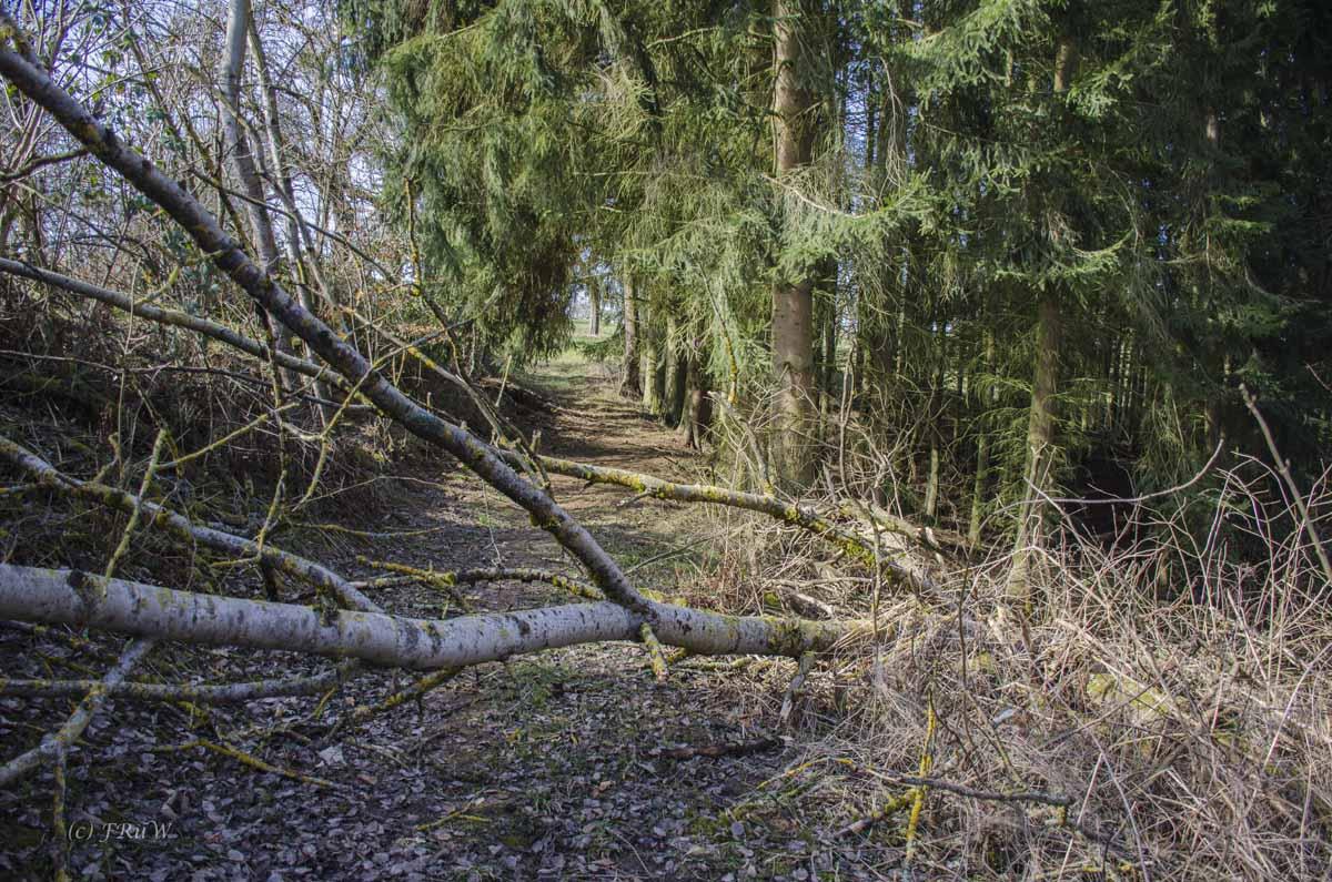 TraumschleifeHasenkammer_ (57)