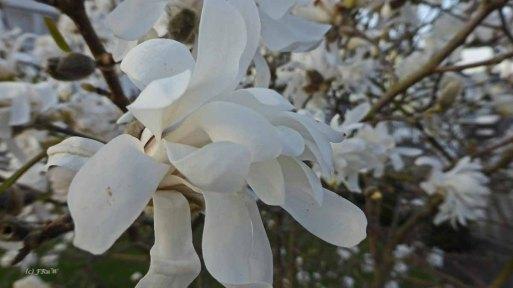 Blumenbilder Moselsteig_0001