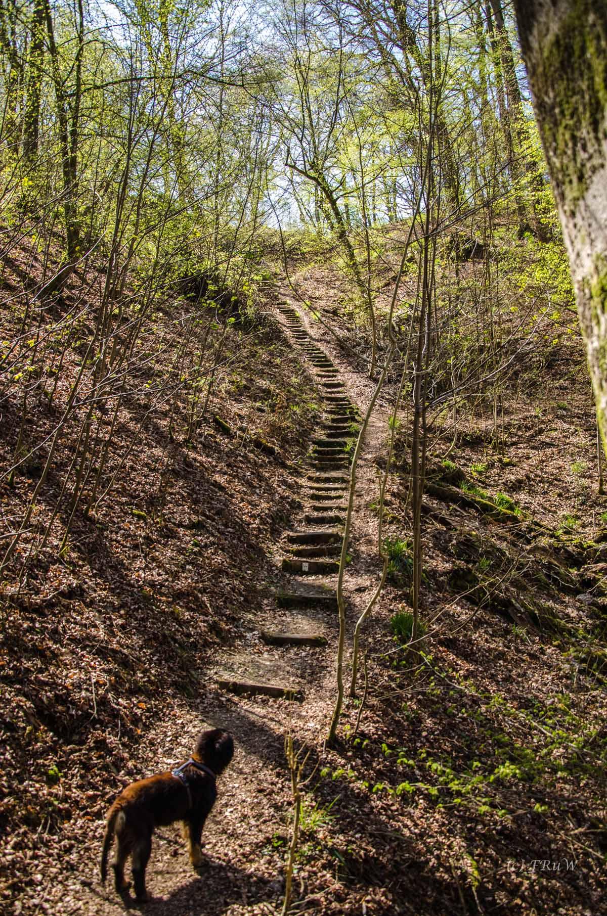 Hachenburg_Tal der Nister 299
