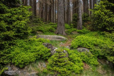 Urlaub Harz 2015_0403