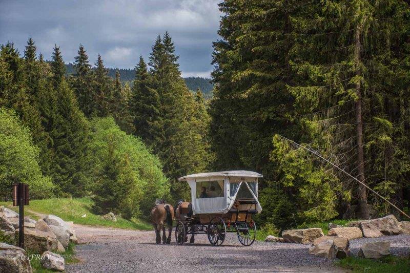 Urlaub Harz 2015_0432