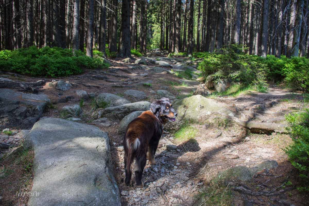 Urlaub Harz 2015_0447