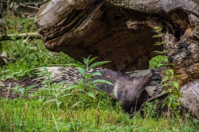 TierparkReuschenberg_0076