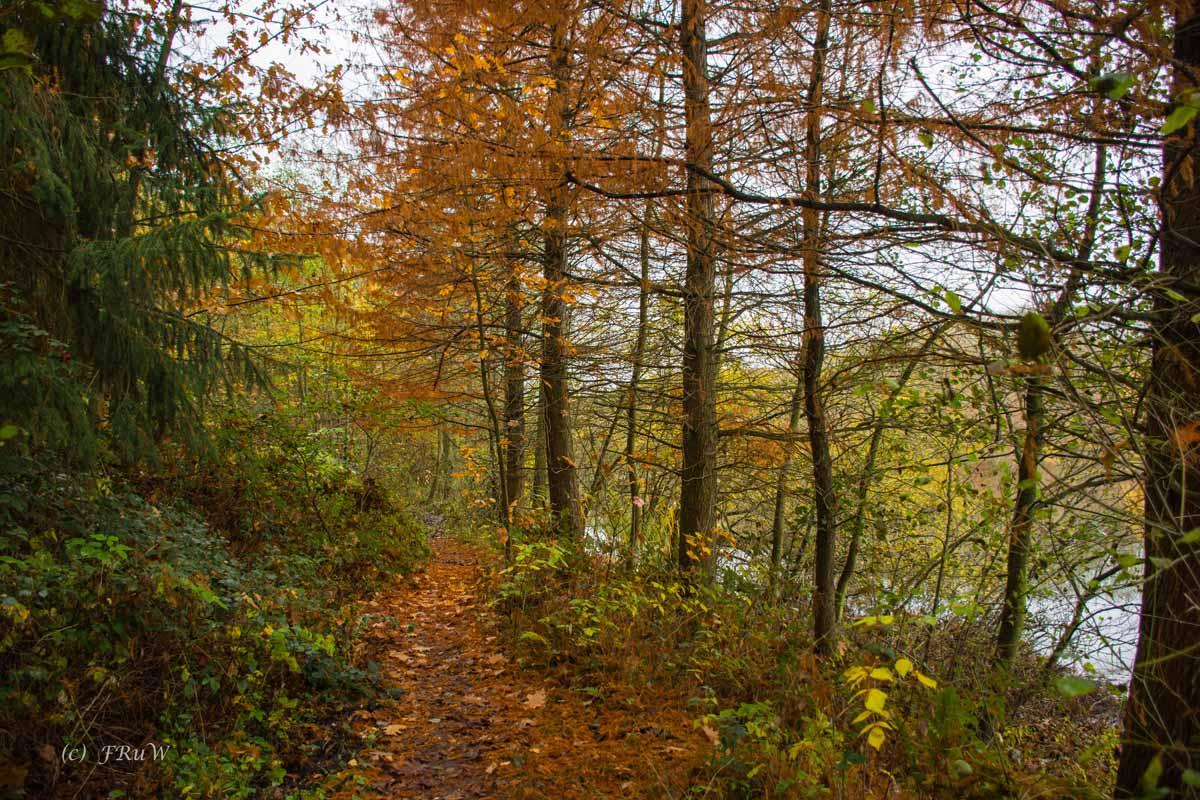 Brühler Seen (60)