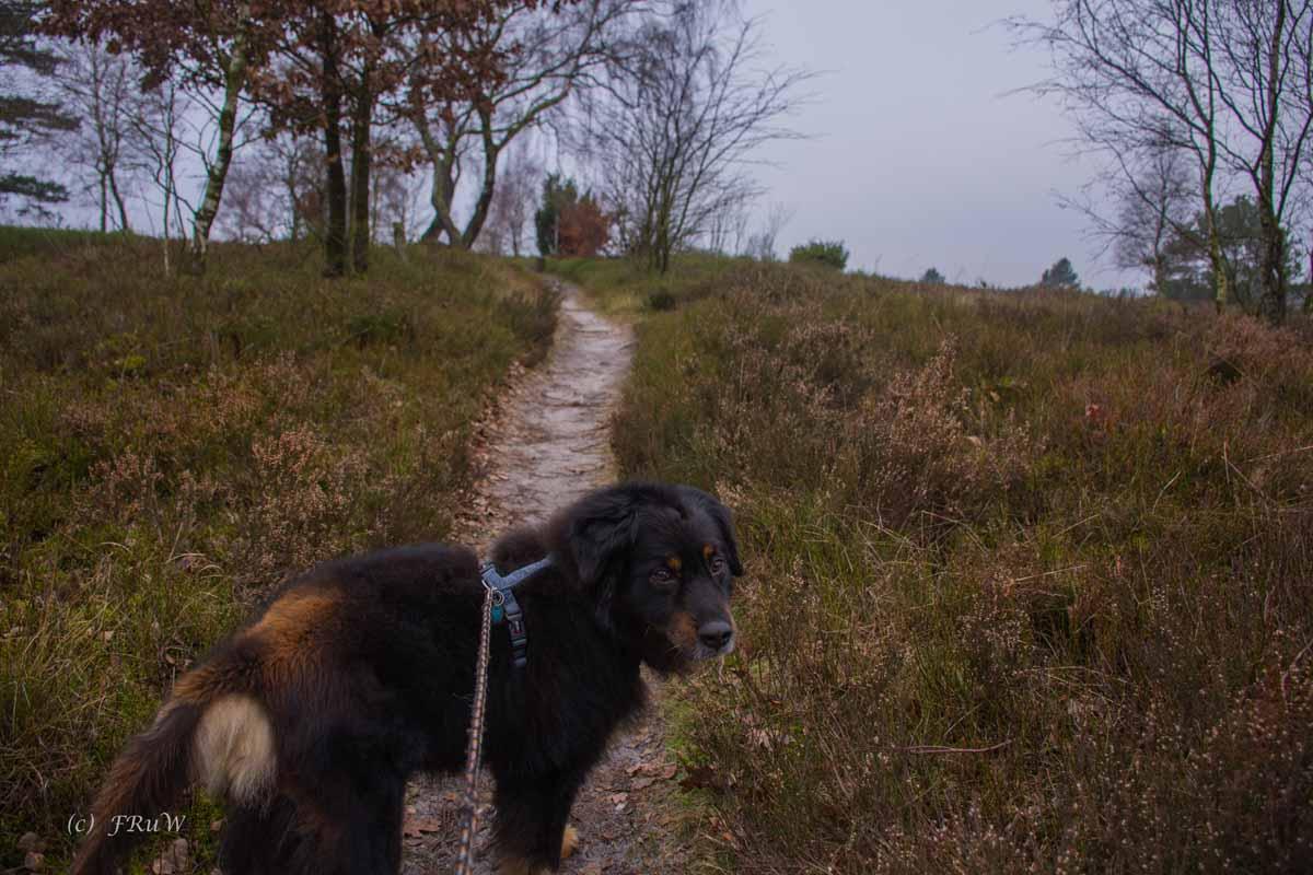 Sellhorn_Totengrund (127)