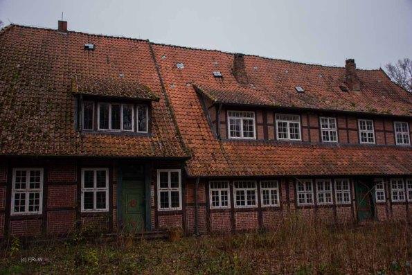 Wacholderwald (133)