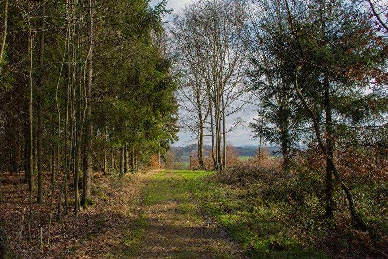 Waldmythenweg (101)