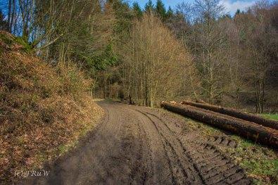 Waldmythenweg (157)
