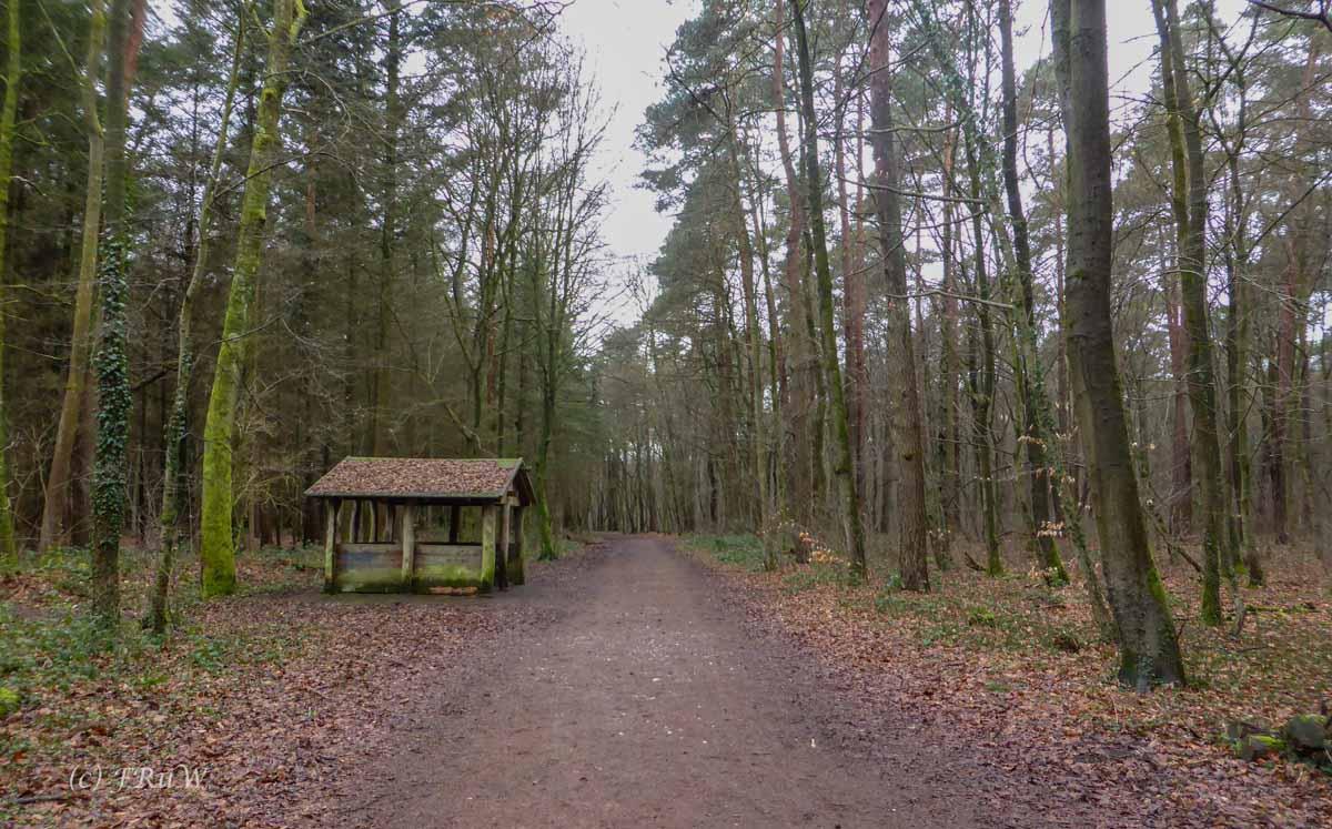 Wildpark_HoehenfelderSee_DellbrueckerHeide (19)