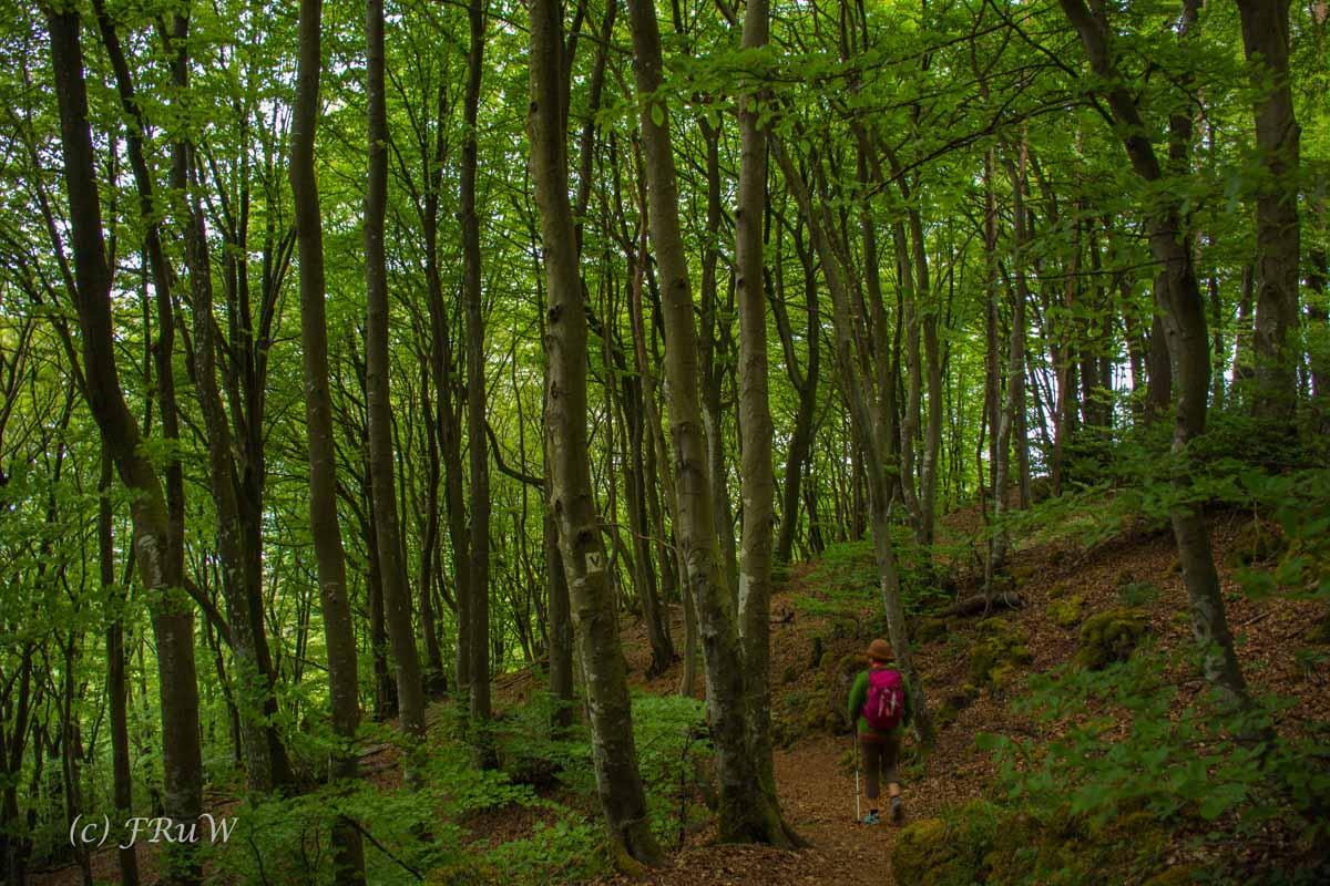 Gerolsteiner Felsenweg (131)