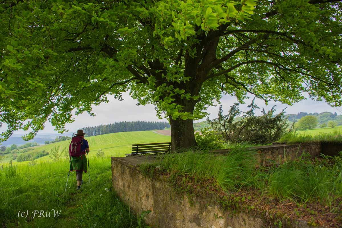 Gerolsteiner Felsenweg (39)