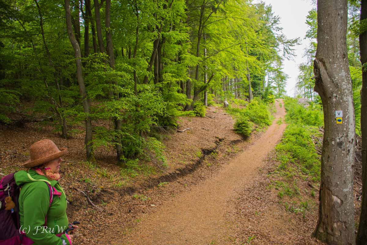 Gerolsteiner Felsenweg (45)