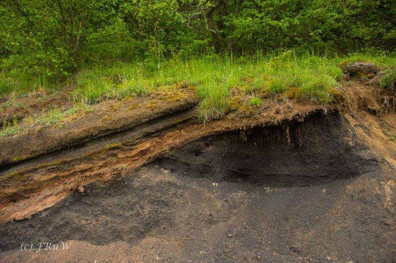 Gerolsteiner Felsenweg (68)