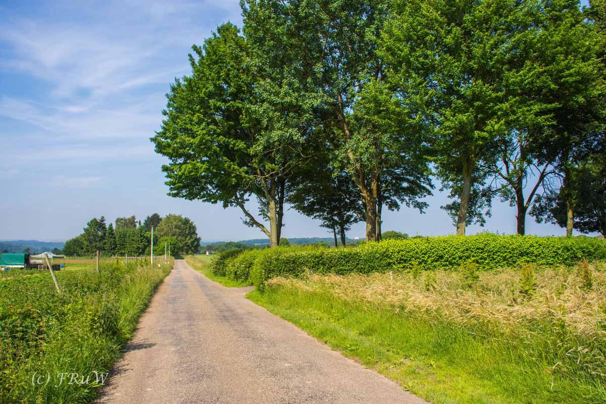 ObstwegSolingen (128)