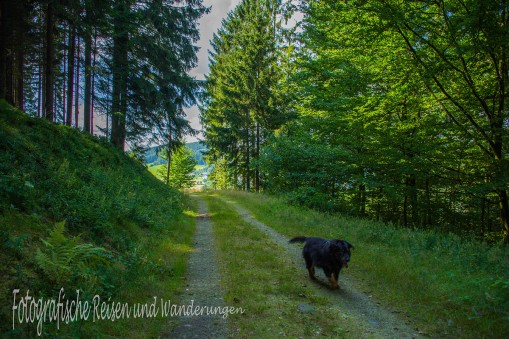 BergischerStreifzugBaumweg (120)