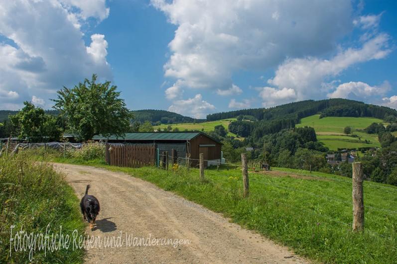 BergischerStreifzugBaumweg (91)