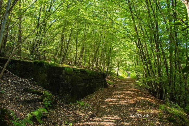 BergischerStreifzugBergbauweg-(162)