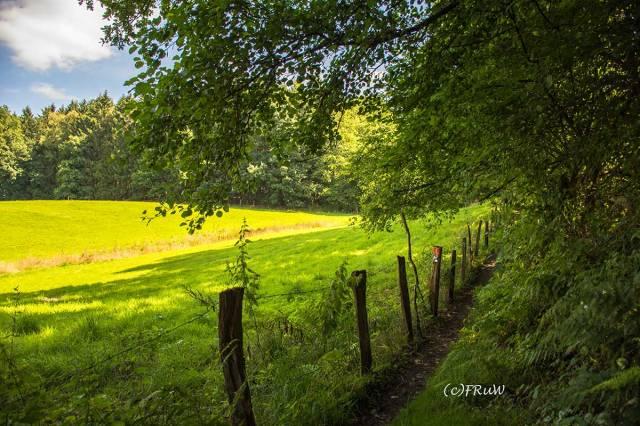 BergischerStreifzugFuhrmannsweg-(20)