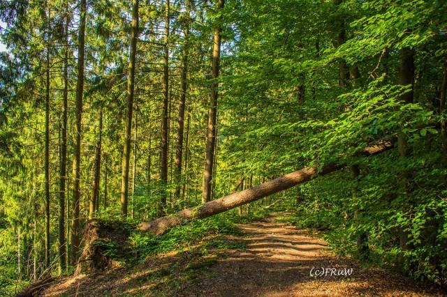 ErlebniswegeSieg_Holzweg-(284)