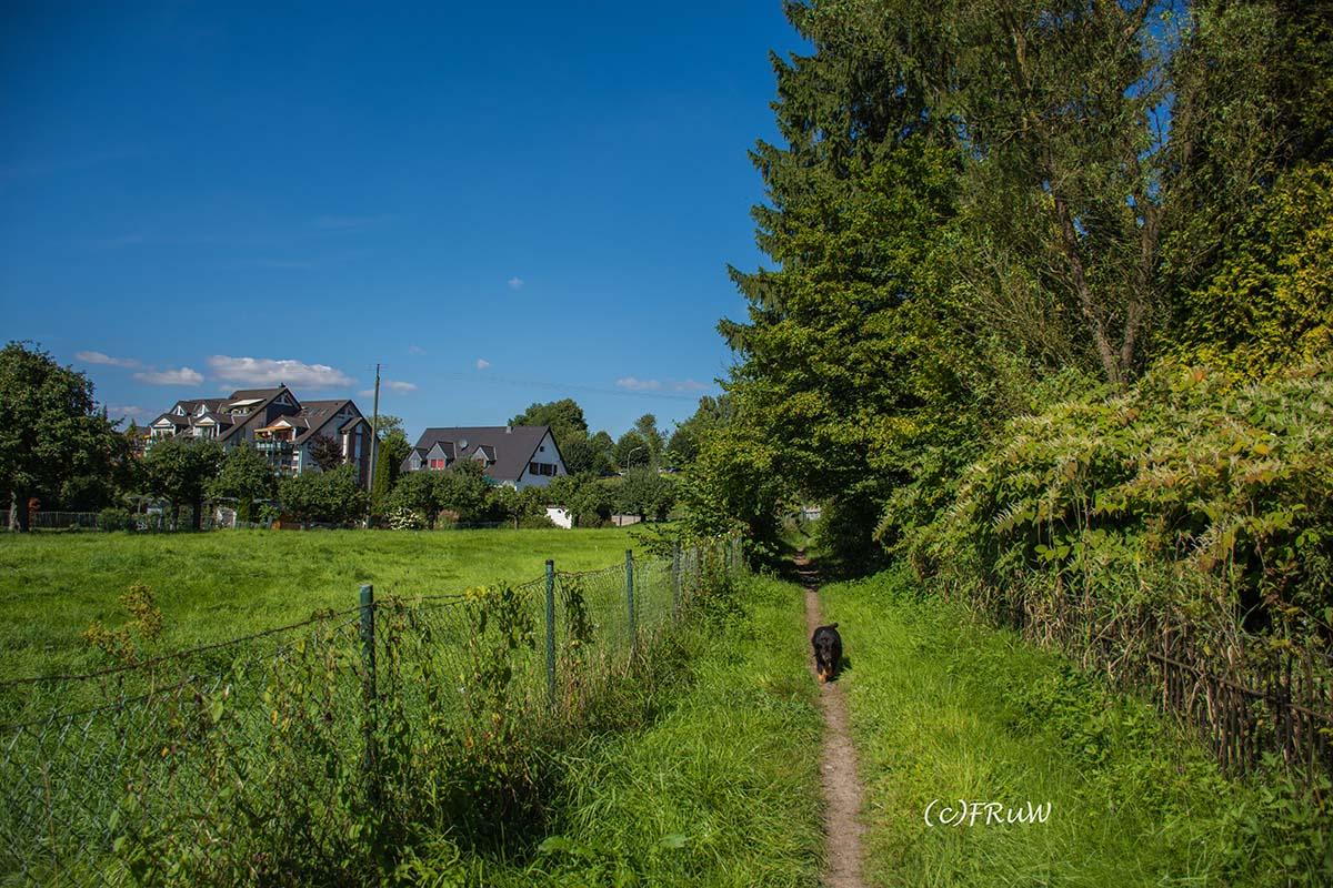 Bergischer_Streifzug_Pilgerweg (269)