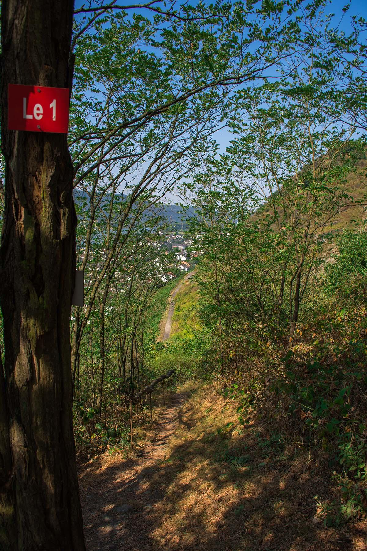 rheinsteig_rodenbach_leutesdorf-133